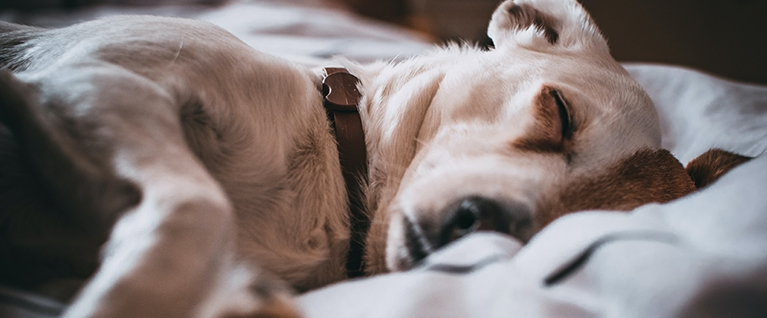 Better Bedtime Rituals for Dogs & Kids